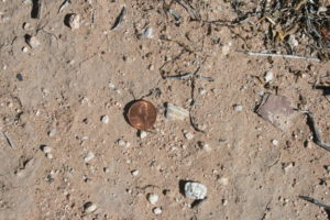 An artifact made from Laevicardium seashell at the Vista del Rio archaeological site in Tucson.